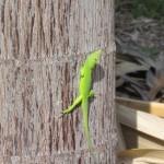 2010 green gecko