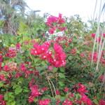 Gallery flora fauna Veselka Star of David