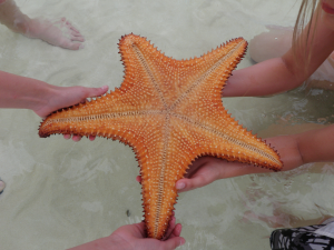 starfish_homeaway